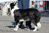 Alma Jolly Dog Moravia - V3